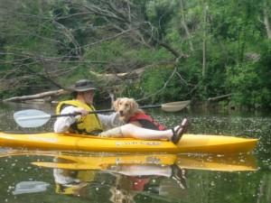 Honey the Golden Retriever is a dog in a kayak.