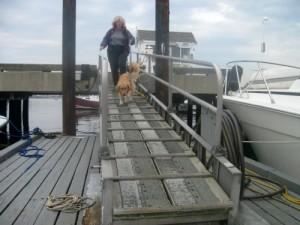 Honey walks down the pier to go sailing.