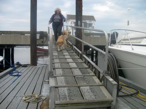 Honey walks down the pier to go sailing.