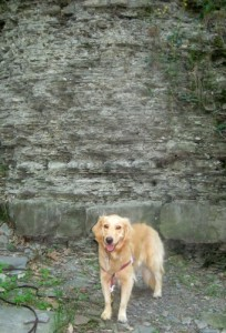 Honey the Golden Retriever poses in the Fall Creek Gorge.