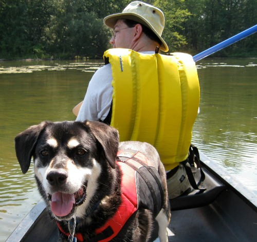My dog rides in a canoe.