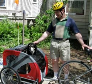 Dog in a bike trailer.
