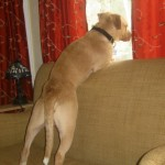 3 Reasons a Dog Will Flinch Without Being Abused