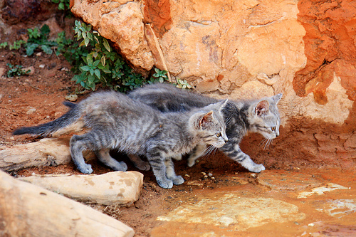 Two cats in Provence.