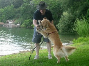 Honey the Golden Retriever plays with Mike.