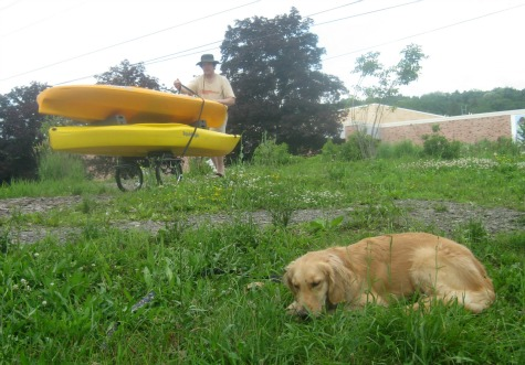 Honey the Golden Retriever naps beside kayaks.