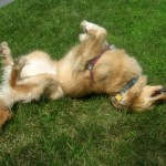What Are My Favorite Dog Blogs? #2