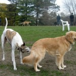 The Internet is One Big Dog Park