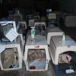 Puppy Mills Harm People Who Hate Dogs – Blog the Change 4 Animals