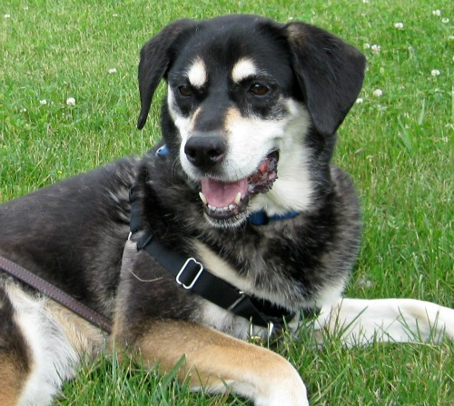 Shadow is a pretty mixed breed dog.