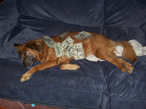 Dog on the couch covered in money.