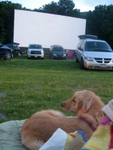 Honey the golden retriever at the drive-in movies during daylight savings time.
