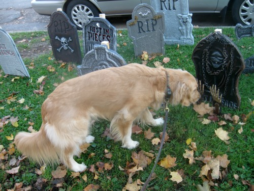 The dog sniffs scary graves.