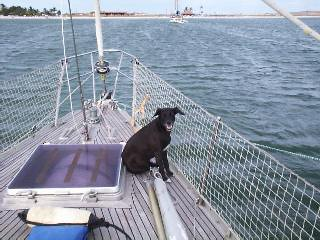 Jack was the boat dog on the sailboat Gilana.