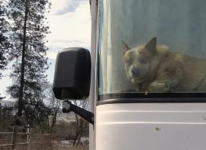 A dog waits in an RV.