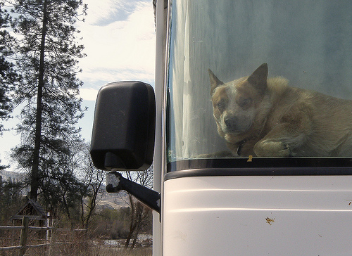 A dog waits in an RV.