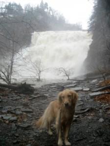 Honey the Golden Retriever is not happy in front of Ithaca Falls.
