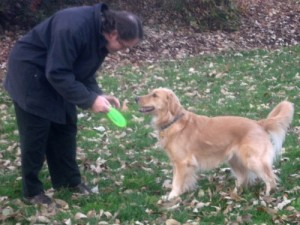 Honey the golden retriever is the star of Something Wagging This Way Comes.
