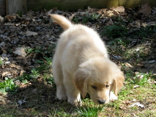 Honey was a perfect puppy.