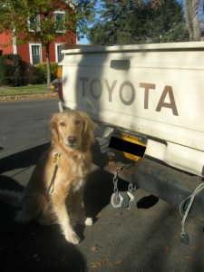 Honey the golden retriever discovered truck nuts in Ithaca.