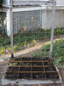 My square foot garden with spinach seedlings.