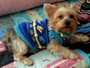 Download the pattern to knit your dog a Hanukkah sweater.