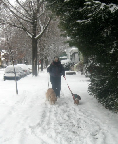 Pamela the pet blogger walking Honey the golden retriever and Ginny the foster dog.