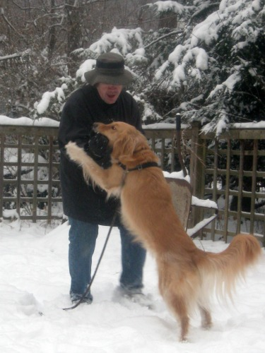 Honey the golden retriever jumps up.