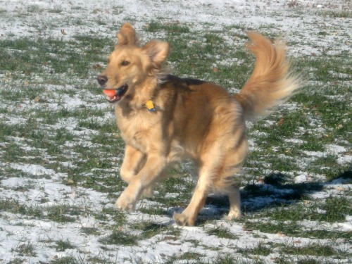 Honey looks like she's dancing with her ears in the air.