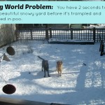 It's a Dog World Problem – Wordless Wednesday