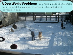Have you ever faced this dog world problem?