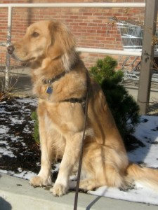 Honey the golden retriever thinks dog lovers are weird.