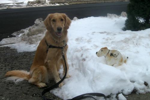 Honey the golden retriever puts the proper spin to make dog chores more fun.