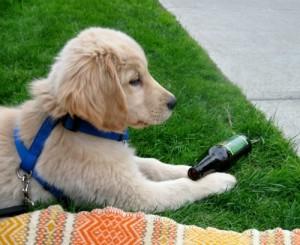 Honey is a puppy rebel.