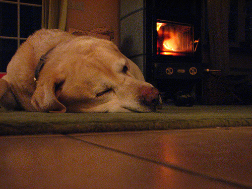Winter reading about pet travel with the dog in front of the fireplace.