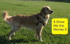 I need to figure out how to make money with my dog.