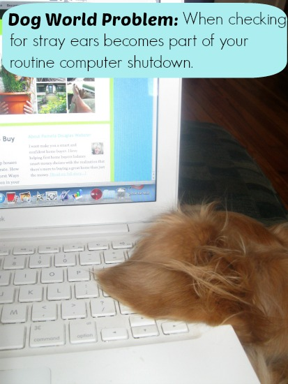 Stray ears in the laptop is a dog world problem.