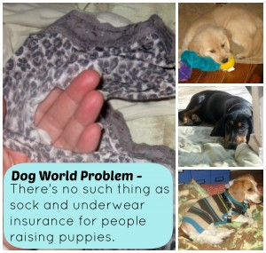 Not having sock and underwear insurance when you're raising a puppy is a dog world problem.