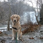 Honey poses at Ithaca Falls.