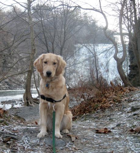 Honey poses at Ithaca Falls.