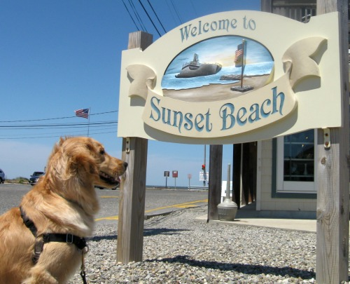 Honey the golden retriever at Sunset Beach.