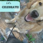 Celebrate – Good for the Dog; Good for You