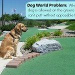 Honey the golden retriever tries golf.