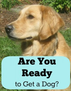 Are you ready to get a dog?