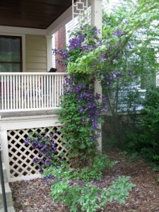 Ithaca porch with clematis growing on it.