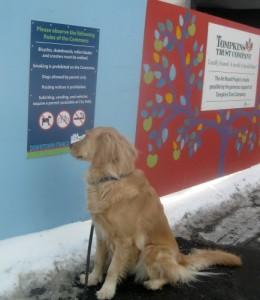 Honey the golden retriever wonders why dogs aren't allowed.