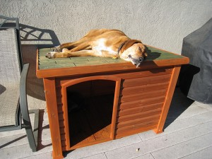 Rusty sleeps on top of his dog house.