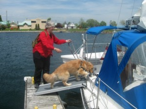 Honey the golden retriever boards a sailboat.