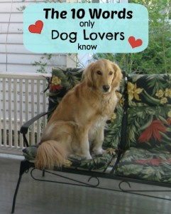 10 Words Only Dog People Know