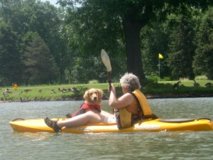 Honey the golden retriever in a kayak.